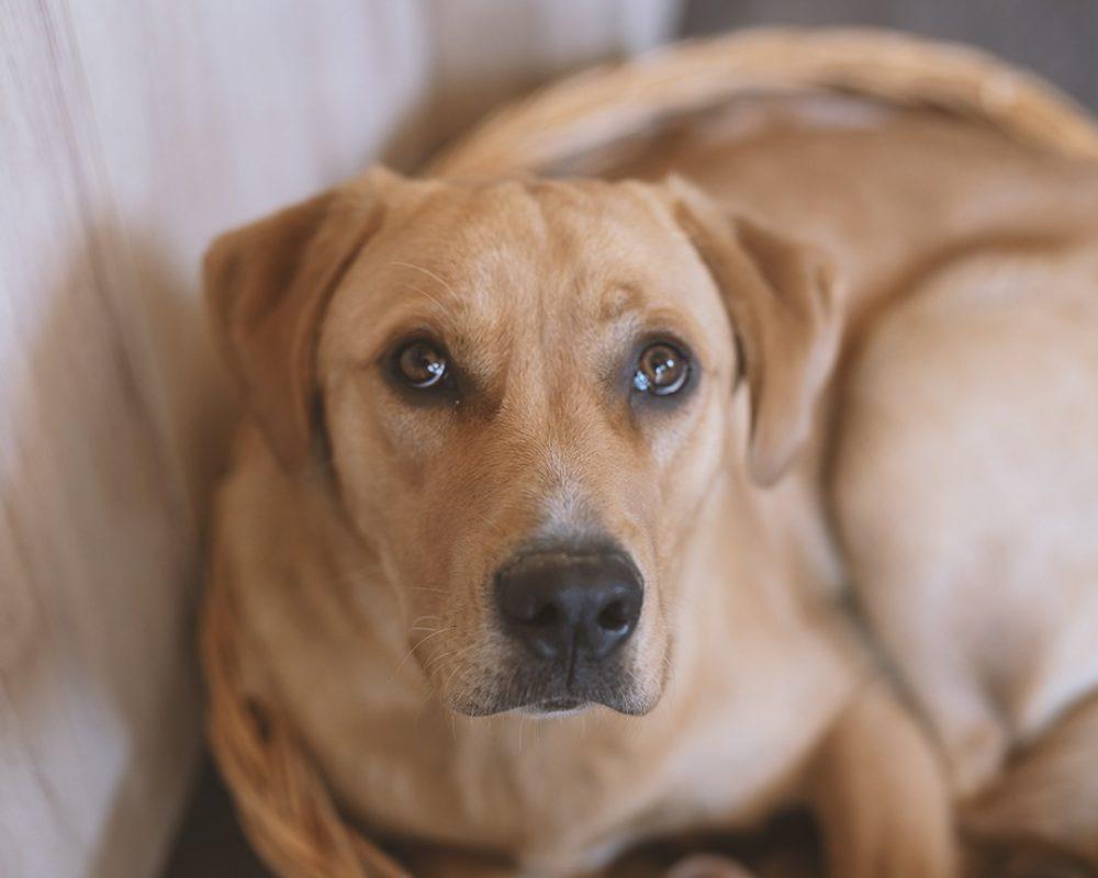 Unser Treuer Firmenhund von Gohla